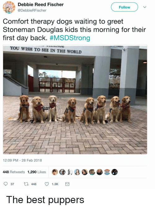 Dogs, Best, and Forever: Debbie Reed Fischer  @DebbieRFischer  THE  Follow  Comfort therapy dogs waiting to greet  Stoneman Douglas kids this morning for their  first day back. #MSDStrong  YOU WISH TO SEE IN THE WORLD  12:09 PM - 28 Feb 2018  448 Retweets 1,290 Likes  FOREVER  LOGICAL  37448 1.3K <p>The best puppers</p>