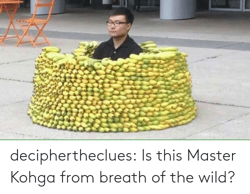 Wild: deciphertheclues:  Is this Master Kohga from breath of the wild?