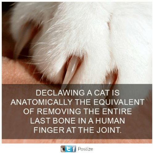 Bones, Memes, and 🤖: DECLAWING A CAT IS  ANATOMICALLY THE EQUIVALENT  OF REMOVING THE ENTIRE  LAST BONE IN A HUMAN  FINGER AT THE JOINT  ef  Postize