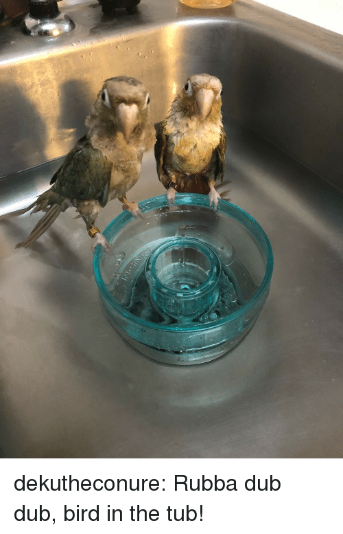 Target, Tumblr, and Blog: dekutheconure:  Rubba dub dub, bird in the tub!