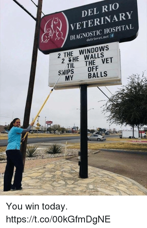 Funny, Windows, and Hospital: DEL RIO  ) VETERINARY  DIAGNOSTIC HOSPITAL  delriovet.net  2 THE WINDOWS  2 HE WALLS  TIL THE VET  SNIPS OFF  MY BALLS You win today. https://t.co/00kGfmDgNE