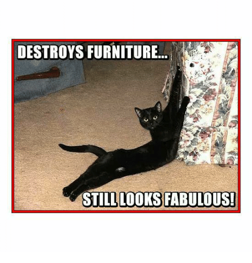 Memes, 🤖, and Fabulous: DESTROYS FURNITURE  STILL LOOKS FABULOUS!