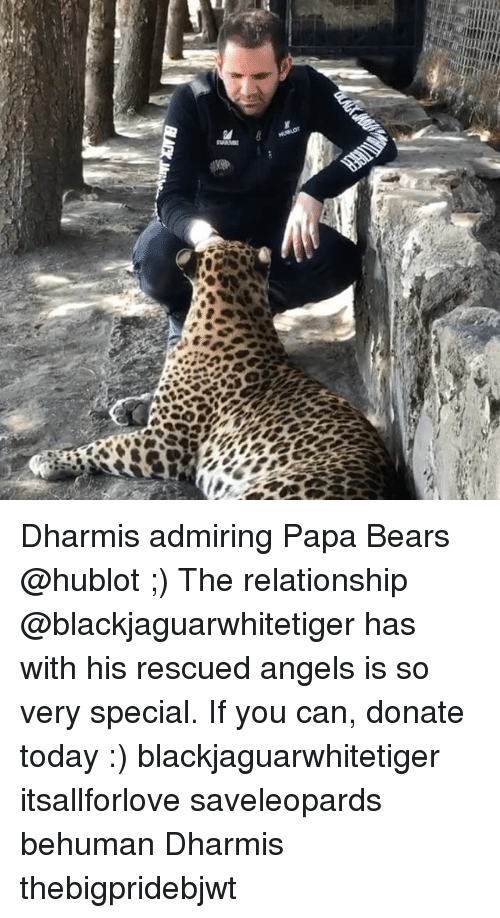 hublot: Dharmis admiring Papa Bears @hublot ;) The relationship @blackjaguarwhitetiger has with his rescued angels is so very special. If you can, donate today :) blackjaguarwhitetiger itsallforlove saveleopards behuman Dharmis thebigpridebjwt