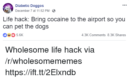 Dogs, Life, and Life Hack: Diabetic Doggos  December 7 at 11:52 PM-  Life hack: Bring cocaine to the airport so you  can pet the dogs  035.6K  4.3K Comments 8.3K Shares Wholesome life hack via /r/wholesomememes https://ift.tt/2Elxndb