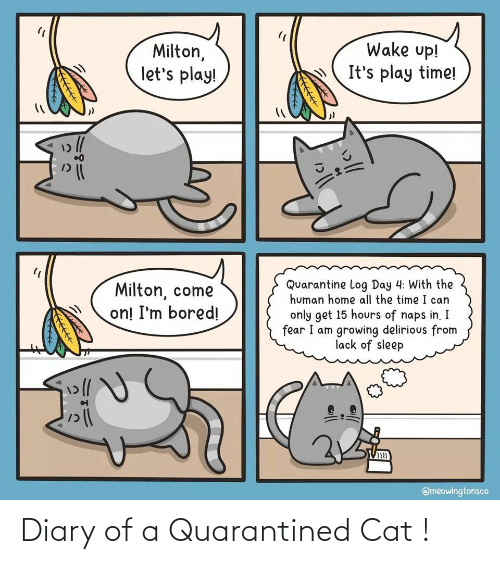 Diary: Diary of a Quarantined Cat !