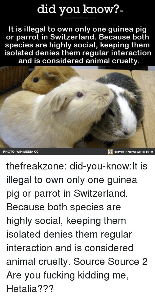 Fucking, Target, and Tumblr: did you kno  w?  It is illegal to own only one guinea pig  or parrot in Switzerland. Because both  species are highly social, keeping them  solated denies them regular interaction  and is considered animal cruelty  回DIDYOUKNOWFACTS.COM  PHOTO: WIKIMEDIA CC thefreakzone:  did-you-know:It is illegal to own only one guinea pig  or parrot in Switzerland. Because both  species are highly social, keeping them  isolated denies them regular interaction  and is considered animal cruelty.    Source Source 2 Are you fucking kidding me, Hetalia???