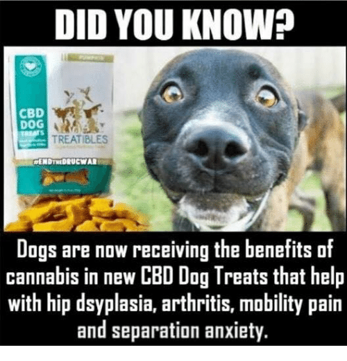 Cbd Oil Memes And Why It S So Hot Right Now Have A Heart