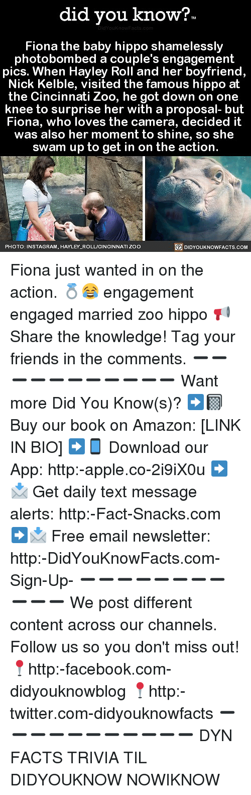 Apple And Facebook Did You Know Fiona The Baby Hippo Shamelessly