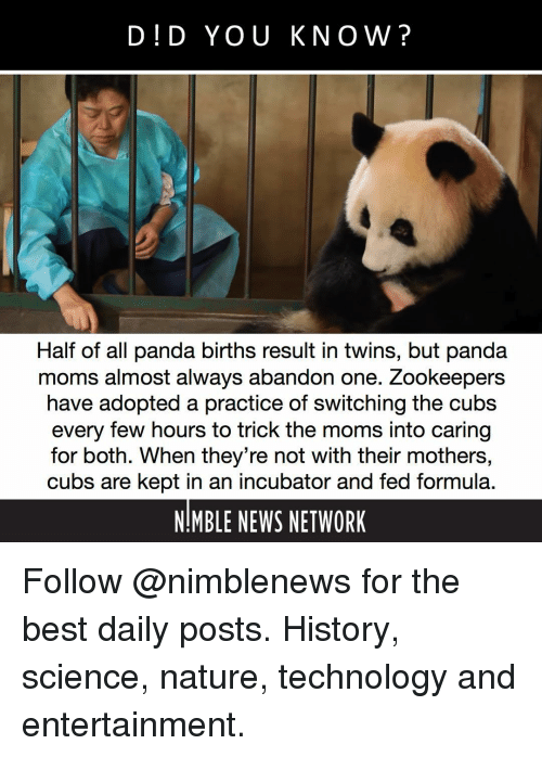 Memes, Moms, and News: DID YOU KNOW?  Half of all panda births result in twins, but panda  moms almost always abandon one. Zookeepers  have adopted a practice of switching the cubs  every few hours to trick the moms into caring  for both. When they're not with their mothers,  cubs are kept in an incubator and fed formula.  NIMBLE NEWS NETWORK Follow @nimblenews for the best daily posts. History, science, nature, technology and entertainment.