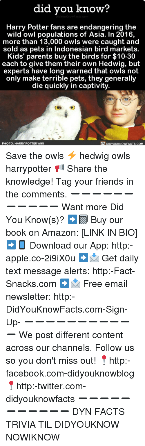 downloader: did you know?  Harry Potter fans are endangering the  wild owl populations of Asia. In 2016,  more than 13,000 owls were caught and  sold as pets in Indonesian bird markets.  Kids' parents buy the birds for $10-30  each to give them their own Hedwig, but  experts have long warned that owls not  only make terrible pets, they generally  die quickly in captivity.  PHOTO: HARRY POTTER WIKI  DIDYOUKNOWFACTS.COM Save the owls ⚡️ hedwig owls harrypotter 📢 Share the knowledge! Tag your friends in the comments. ➖➖➖➖➖➖➖➖➖➖➖ Want more Did You Know(s)? ➡📓 Buy our book on Amazon: [LINK IN BIO] ➡📱 Download our App: http:-apple.co-2i9iX0u ➡📩 Get daily text message alerts: http:-Fact-Snacks.com ➡📩 Free email newsletter: http:-DidYouKnowFacts.com-Sign-Up- ➖➖➖➖➖➖➖➖➖➖➖ We post different content across our channels. Follow us so you don't miss out! 📍http:-facebook.com-didyouknowblog 📍http:-twitter.com-didyouknowfacts ➖➖➖➖➖➖➖➖➖➖➖ DYN FACTS TRIVIA TIL DIDYOUKNOW NOWIKNOW