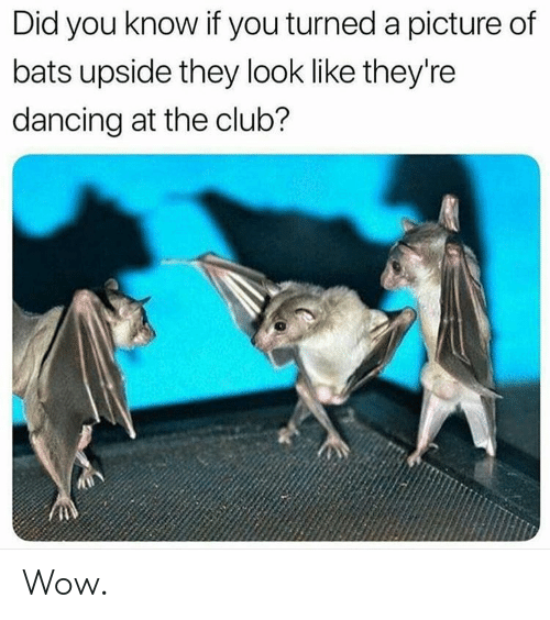 Club, Dancing, and Wow: Did you know if you turned a picture of  bats upside they look like they're  dancing at the club? Wow.