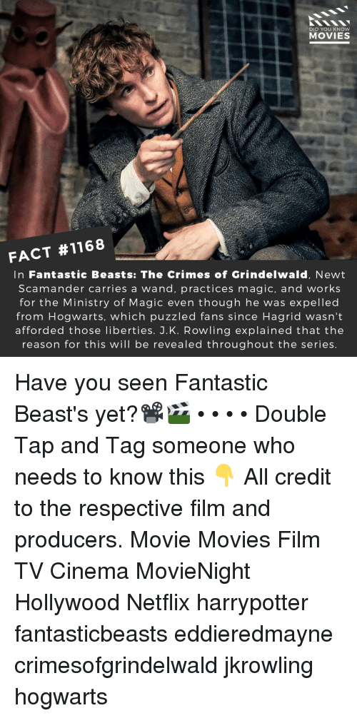 harrypotter: DID YOU KNOW  MOVIES  FACT #1168  In Fantastic Beasts: The Crimes of Grindelwald, Newt  Scamander carries a wand, practices magic, and works  for the Ministry of Magic even though he was expelled  from Hogwarts, which puzzled fans since Hagrid wasn't  afforded those liberties. J.K. Rowling explained that the  reason for this will be revealed throughout the series Have you seen Fantastic Beast's yet?📽️🎬 • • • • Double Tap and Tag someone who needs to know this 👇 All credit to the respective film and producers. Movie Movies Film TV Cinema MovieNight Hollywood Netflix harrypotter fantasticbeasts eddieredmayne crimesofgrindelwald jkrowling hogwarts
