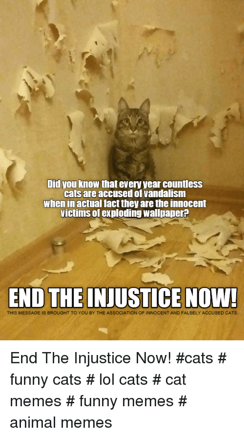 funny cats: Did you know that every year countless  cats are accused of vandalism  when in actual fact they are the innocent  victims of exploding wallpaper?  END THE INJUSTICE NOW!  THIS MESSAGE IS BROUGHT TO YOU BY THE ASSOCIATION OF INNOCENT AND FALSELY ACCUSED CATS End The Injustice Now!  #cats # funny cats # lol cats # cat memes # funny memes # animal memes