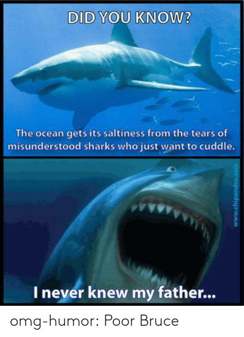 Omg, Tumblr, and Blog: DID YOU KNOW?  The ocean gets its saltiness from the tears of  misunderstood sharks who just want to cuddle.  Inever knew my fathe...  www.chipandco.com omg-humor:  Poor Bruce