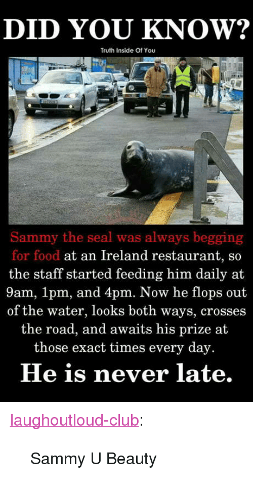 "Club, Food, and Tumblr: DID YOU KNOW?  Truth Inside Of You  Sammy the seal was always begging  for food at an Ireland restaurant, so  the staff started feeding him daily at  9am, 1pm, and 4pm. Now he flops out  of the water, looks both ways, crosses  the road, and awaits his prize at  those exact times every day.  He is never late. <p><a href=""http://laughoutloud-club.tumblr.com/post/172117413825/sammy-u-beauty"" class=""tumblr_blog"">laughoutloud-club</a>:</p>  <blockquote><p>Sammy U Beauty</p></blockquote>"