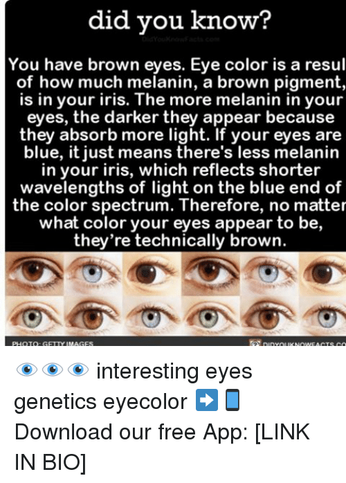 Brown Eye: did you know?  You have brown eyes. Eye color is a resul  of how much melanin, a brown pigment,  is in your iris. The more melanin in your  eyes, the darker they appear because  they absorb more light. If your eyes are  blue, it just means there's less melanin  in your iris, which reflects shorter  wavelengths of light on the blue end of  the color spectrum. Therefore, no matter  what color your eyes appear to be,  they're technically brown. 👁👁👁 interesting eyes genetics eyecolor ➡📱Download our free App: [LINK IN BIO]