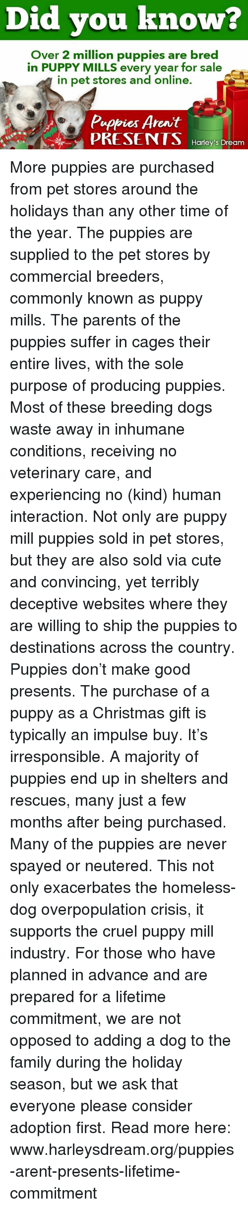 Christmas, Cute, and Dogs: Did you known  Over 2 million puppies are bred  in PUPPY MILLS every year for sale  in pet stores and online  Pappies Arnit  PRESENTS Haoy'sDroam More puppies are purchased from pet stores around the holidays than any other time of the year. The puppies are supplied to the pet stores by commercial breeders, commonly known as puppy mills. The parents of the puppies suffer in cages their entire lives, with the sole purpose of producing puppies. Most of these breeding dogs waste away in inhumane conditions, receiving no veterinary care, and experiencing no (kind) human interaction.  Not only are puppy mill puppies sold in pet stores, but they are also sold via cute and convincing, yet terribly deceptive websites where they are willing to ship the puppies to destinations across the country.  Puppies don't make good presents. The purchase of a puppy as a Christmas gift is typically an impulse buy. It's irresponsible. A majority of puppies end up in shelters and rescues, many just a few months after being purchased. Many of the puppies are never spayed or neutered. This not only exacerbates the homeless-dog overpopulation crisis, it supports the cruel puppy mill industry.  For those who have planned in advance and are prepared for a lifetime commitment, we are not opposed to adding a dog to the family during the holiday season, but we ask that everyone please consider adoption first.  Read more here: www.harleysdream.org/puppies-arent-presents-lifetime-commitment