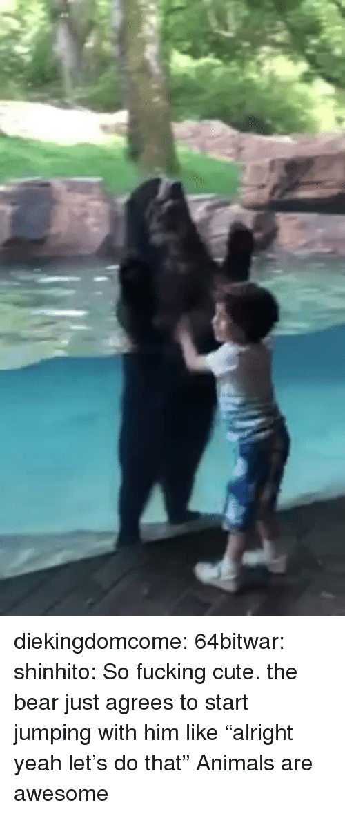 """Animals, Cute, and Fucking: diekingdomcome: 64bitwar:  shinhito: So fucking cute. the bear just agrees to start jumping with him like""""alright yeah let's do that""""   Animals are awesome"""