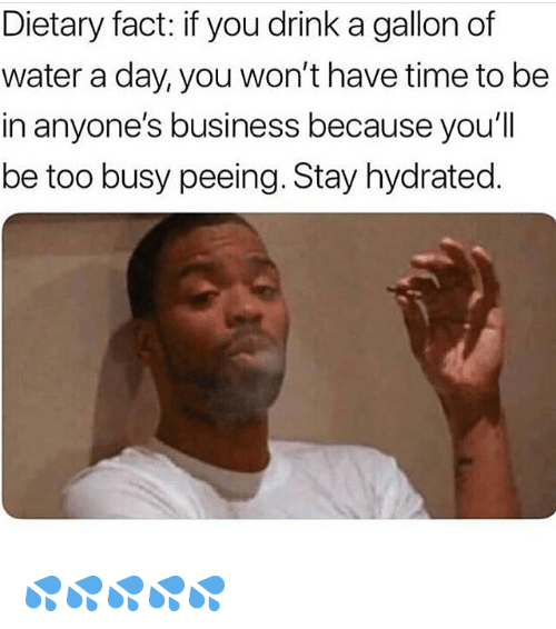 Memes, Business, and Time: Dietary fact: if you drink a gallon of  water a day, you won't have time to be  in anyone's business because you'll  be too busy peeing. Stay hydrated 💦💦💦💦💦