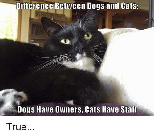 dog-and-cats: Difference Between Dogs and Cats:  Dogs Have Owners, Cats Have Staff True...