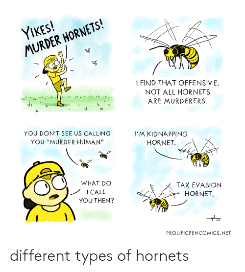 Types Of: different types of hornets