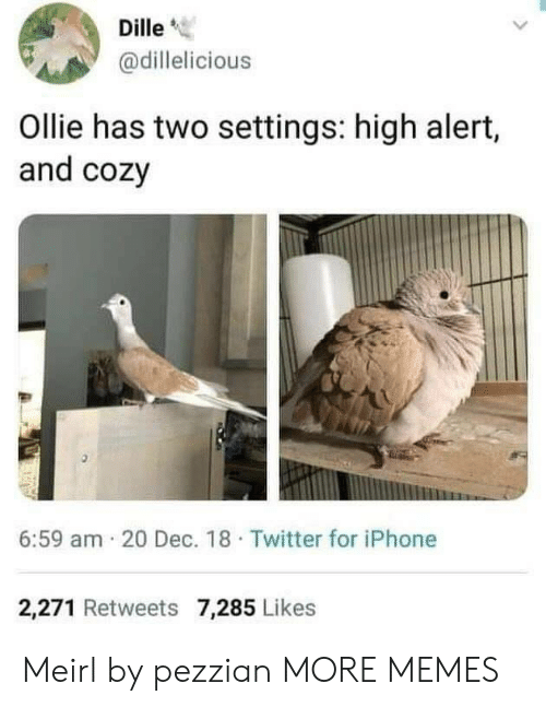 """cozy: Dille""""  @dillelicious  Ollie has two settings: high alert,  and cozy  6:59 am 20 Dec. 18 Twitter for iPhone  2,271 Retweets 7,285 Likes Meirl by pezzian MORE MEMES"""