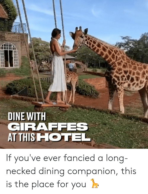 Dank, Hotel, and 🤖: DINE WITH  GIRAFFES  AT THIS HOTEL If you've ever fancied a long-necked dining companion, this is the place for you 🦒