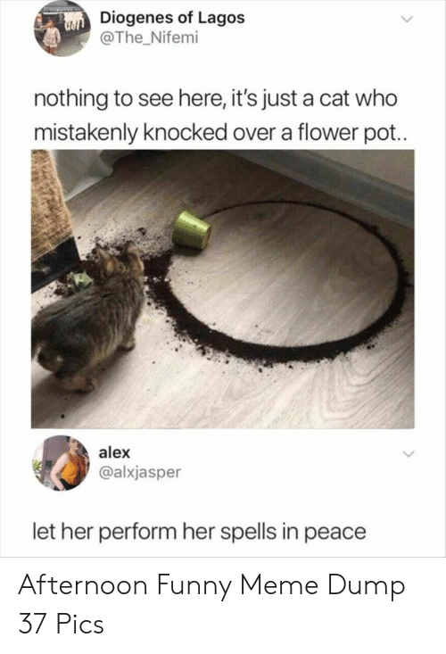 Spells: Diogenes of Lagos  @The Nifemi  nothing to see here, it's just a cat who  mistakenly knocked over a flower pot..  alex  @alxjasper  let her perform her spells in peace Afternoon Funny Meme Dump 37 Pics