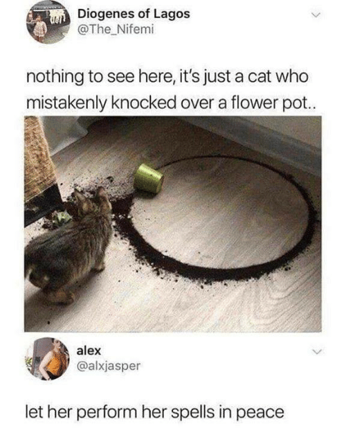 Spells: Diogenes of Lagos  @The Nifemi  nothing to see here, it's just a cat who  mistakenly knocked over a flower pot.  alex  @alxjasper  let her perform her spells in peace