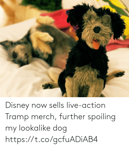 merch: Disney now sells live-action Tramp merch, further spoiling my lookalike dog https://t.co/gcfuADiAB4