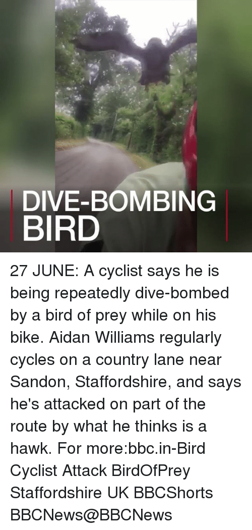 Memes, Bike, and 🤖: DIVE-BOMBING  BIRD 27 JUNE: A cyclist says he is being repeatedly dive-bombed by a bird of prey while on his bike. Aidan Williams regularly cycles on a country lane near Sandon, Staffordshire, and says he's attacked on part of the route by what he thinks is a hawk. For more:bbc.in-Bird Cyclist Attack BirdOfPrey Staffordshire UK BBCShorts BBCNews@BBCNews