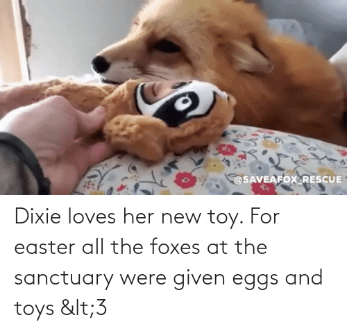Toys: Dixie loves her new toy. For easter all the foxes at the sanctuary were given eggs and toys <3