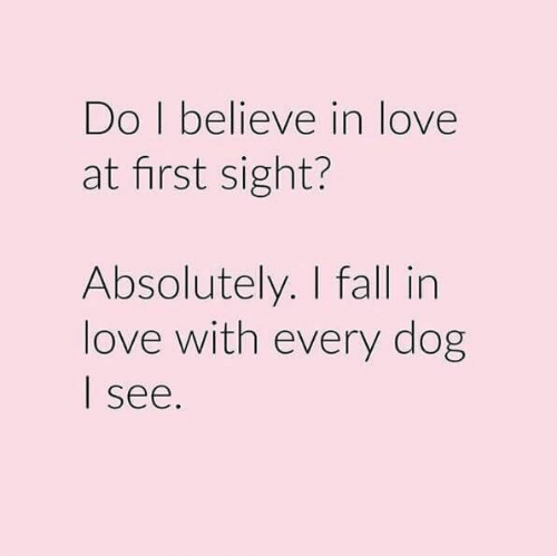 believe: Do I believe in love  at first sight?  Absolutely. I fall in  love with every dog  see.