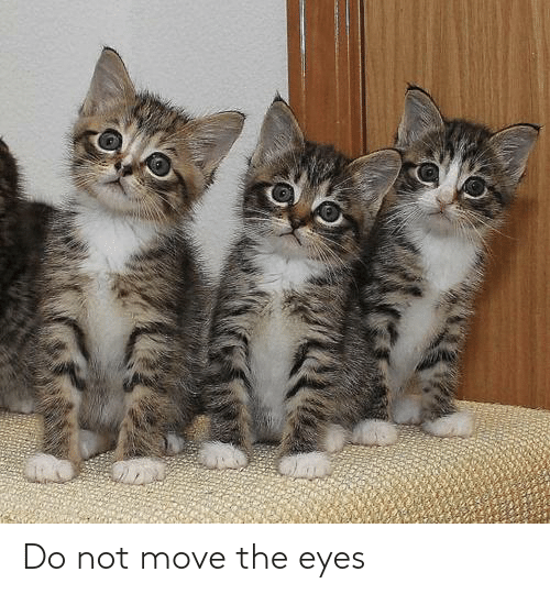 move: Do not move the eyes