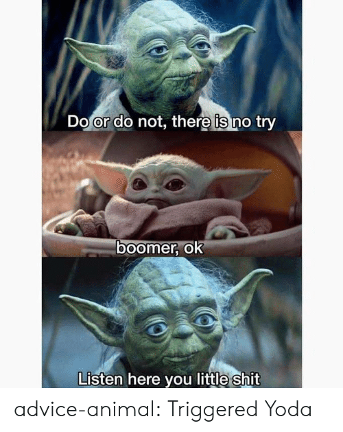 Little Shit: Do or do not, there is no try  ०ा  boomer, ok  Listen here you little shit advice-animal:  Triggered Yoda