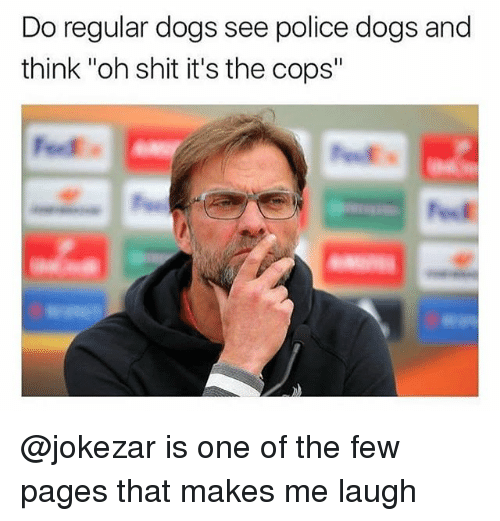 """police dogs: Do regular dogs see police dogs and  think """"oh shit it's the cops"""" @jokezar is one of the few pages that makes me laugh"""