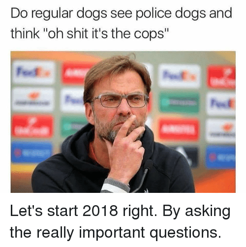 """police dogs: Do regular dogs see police dogs and  think """"oh shit it's the cops"""" Let's start 2018 right. By asking the really important questions."""