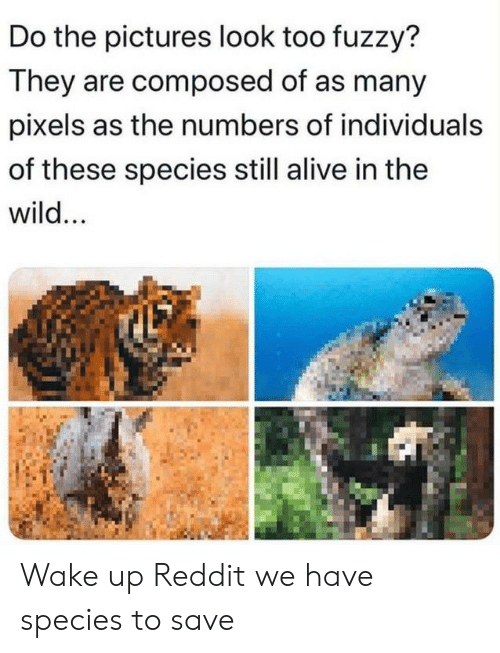 Alive, Reddit, and Pictures: Do the pictures look too fuzzy?  They are composed of as many  pixels as the numbers of individuals  of these species still alive in the  wild... Wake up Reddit we have species to save