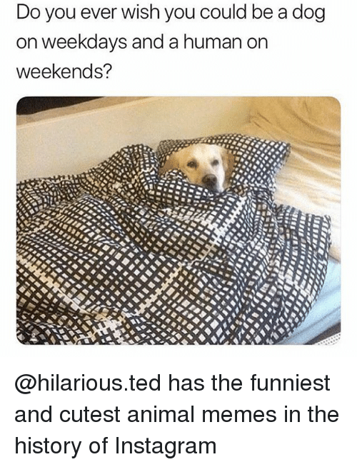 Instagram Memes And Ted Do You Ever Wish You Could Be A Dog