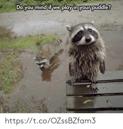 Memes, Mind, and 🤖: Do you mind if we play in your puddle? https://t.co/OZssBZfam3