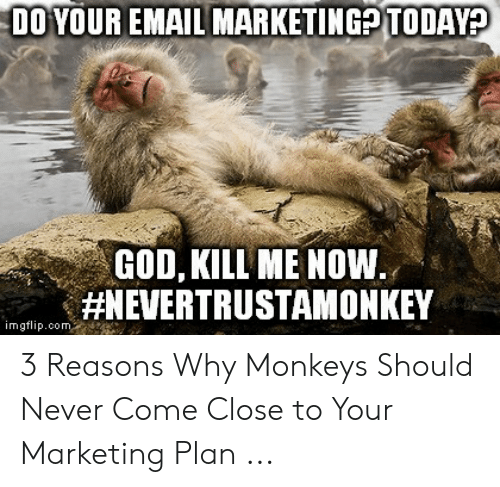 God Kill Me Now: DO YOUR EMAIL MARKETINGPTODAY?  GOD, KILL ME NOW.  #NEVERTRUSTAMONKEY  imgflip.com 3 Reasons Why Monkeys Should Never Come Close to Your Marketing Plan ...