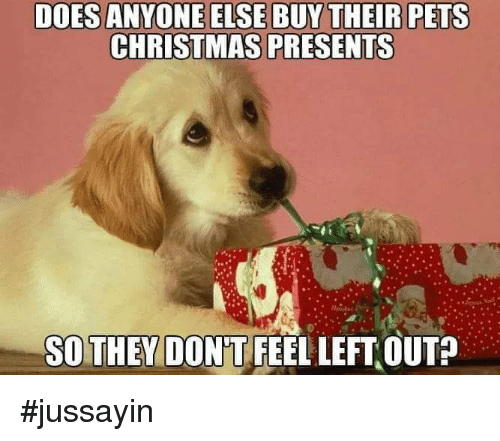 Christmas, Dank, and Pets: DOES ANYONE ELSE BUY THEIR PETS  CHRISTMAS PRESENTS  SOTHEY DON'T FEEL LEFT OUT? #jussayin