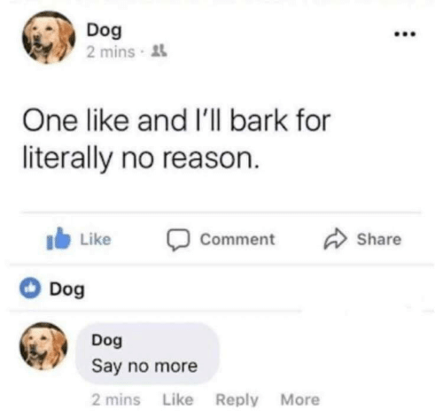 Say No More, Reason, and Dog: Dog  2 mins  One like and I'l bark for  literally no reason  Share  Like  Comment  Dog  Dog  Say no more  2 mins Like Reply More