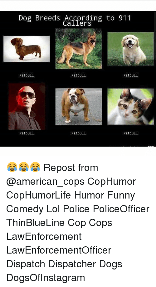 Dogs, Funny, and Lol: Dog Breeds According to 911  Callers  Pitbull  Pitbull  Pitbull  Pitbull  Pitbull  Pitbull 😂😂😂 Repost from @american_cops CopHumor CopHumorLife Humor Funny Comedy Lol Police PoliceOfficer ThinBlueLine Cop Cops LawEnforcement LawEnforcementOfficer Dispatch Dispatcher Dogs DogsOfInstagram