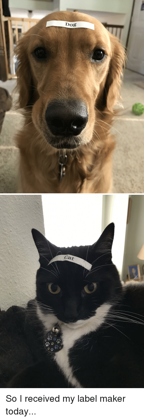 Funny, Today, and Dog: Dog   Cat So I received my label maker today...
