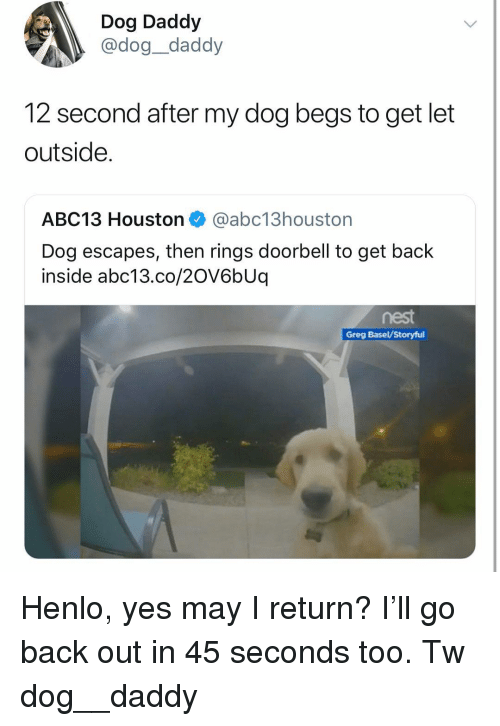 Memes, Abc13, and Houston: Dog Daddy  @dog_daddy  12 second after my dog begs to get let  outside.  ABC13 Houston@abc13houstorn  Dog escapes, then rings doorbell to get back  inside abc13.co/20V6bUq  Greg Basel/Storyful Henlo, yes may I return? I'll go back out in 45 seconds too. Tw dog__daddy