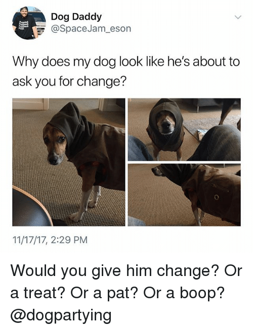 Memes, Change, and Boop: Dog Daddy  @SpaceJam, eson  Why does my dog look like he's about to  ask you for change?  11/17/17, 2:29 PM Would you give him change? Or a treat? Or a pat? Or a boop? @dogpartying