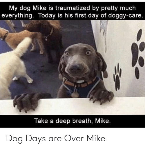 mike: Dog Days are Over Mike