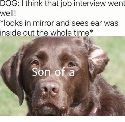 Dank, Inside Out, and Job Interview: DOG: I think that job interview went  well!  *looks in mirror and sees ear was  inside out the whole time  Son of a