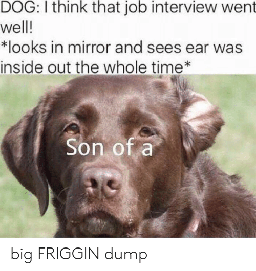 Inside Out, Job Interview, and Mirror: DOG: I think that job interview went  well!  *looks in mirror and sees ear was  inside out the whole time*  Son of a big FRIGGIN dump